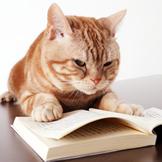 テレビ東京「週刊ニュース新書」に出演していた猫のまーご死す